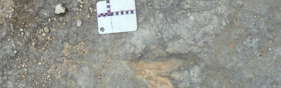 Paleontologia_slider