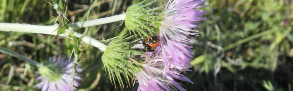 Synema-slider-biodiversita
