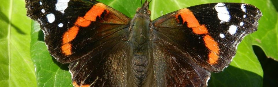 Vanessa-slider-biodiversita