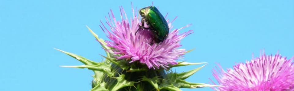 cetonia-slider-biodiversita