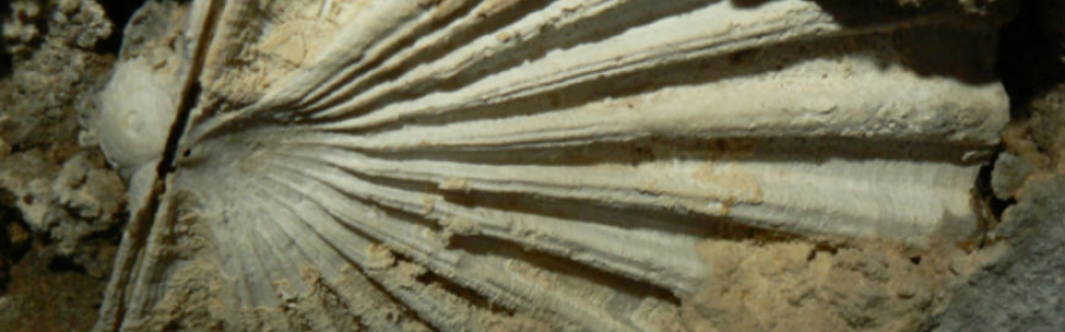 paleontologia2slider1